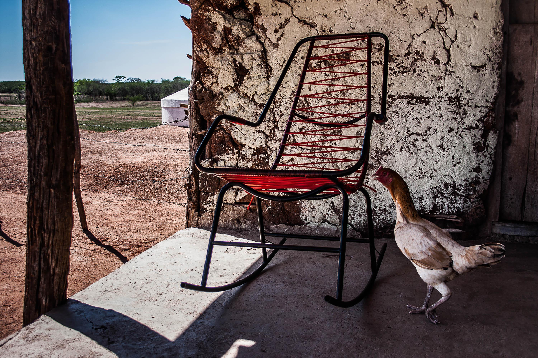19-a-cadeira-e-a-galinha